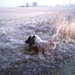 Pies był głodny i wychłodzony, miał zaszronioną sierść - z pomocą przyszli policjanci
