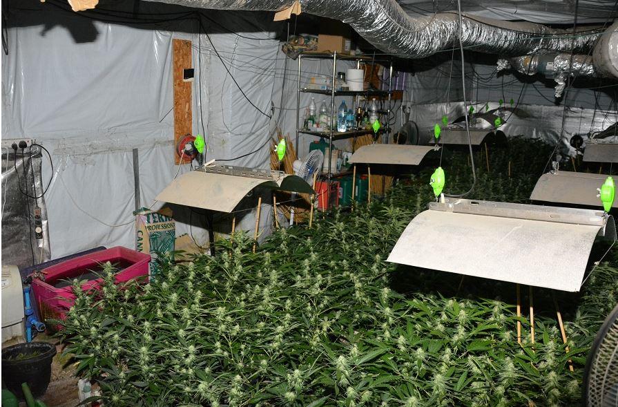 Pojechali do pożaru a znaleźli plantację marihuany