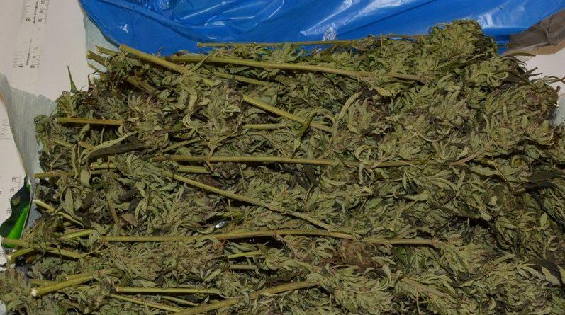 Kolejne uderzenie w narkobiznes –kryminalni z I komisariatu przejęli narkotyki o czarnorynkowej wartości ponad 70 tysięcy złotych
